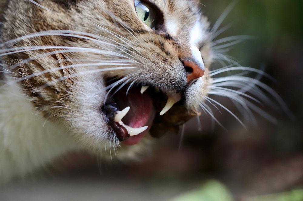 Les animaux domestiques réagissent de manière plus agressive en raison de la pollution sonore