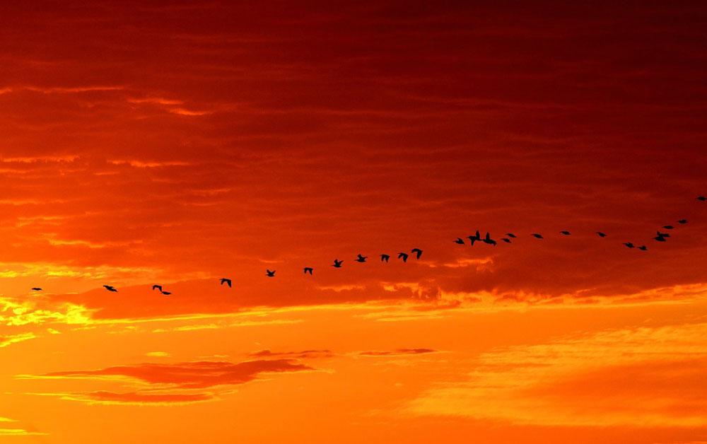 La pollution sonore perturbent la migration des oiseaux